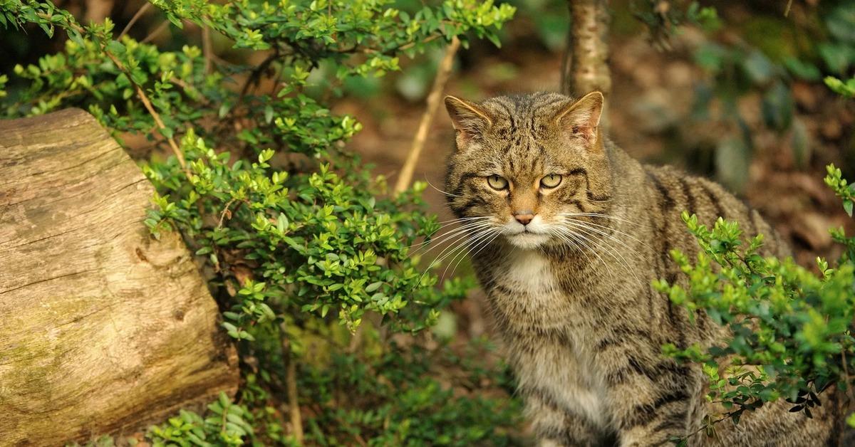Як животное. описание, особенности, виды, образ жизни и среда обитания яка | живность.ру