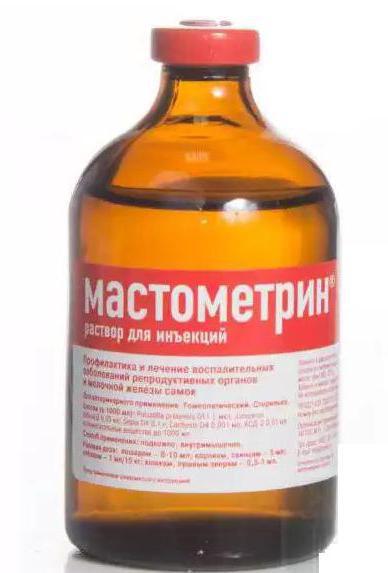 «мастометрин» (раствор для инъекций): от чего помогает, как применять для кошек и собак