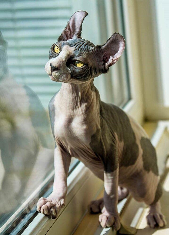 Необычные кошки – кто способен удивить сильнее всех?