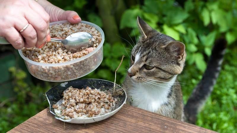 Какие каши можно давать кошкам