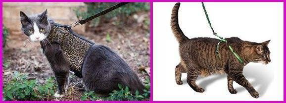 Зачем нужны шлейка и поводок для кошки?
