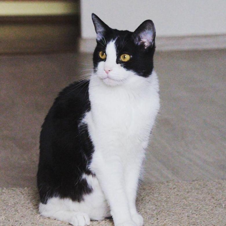 Каких пород бывают кошки черного окраса? породы черных кошек | интересные факты