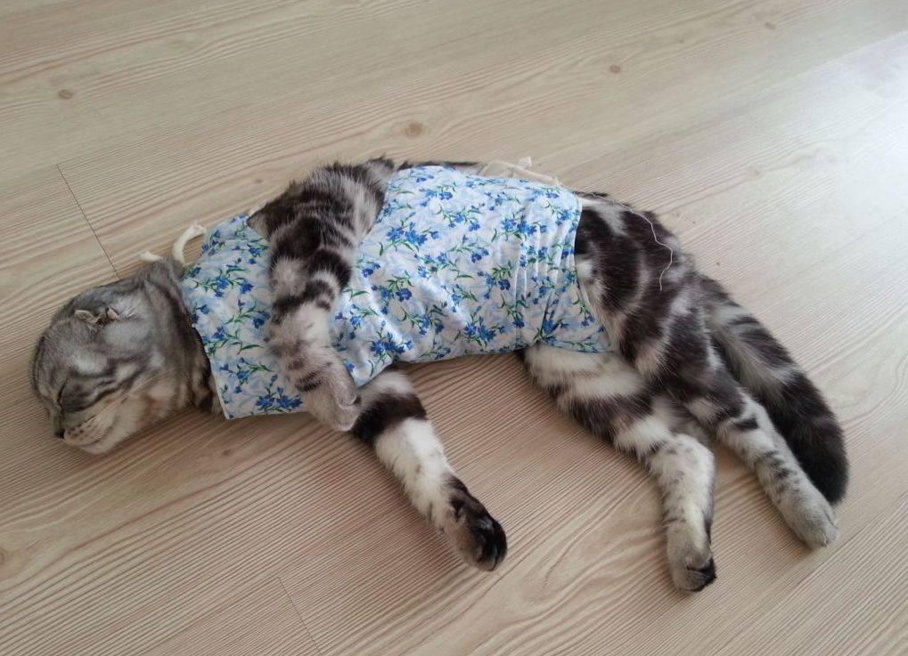 Кошка не пьет воду из миски, совсем, только молоко, после стерилизации, что делать