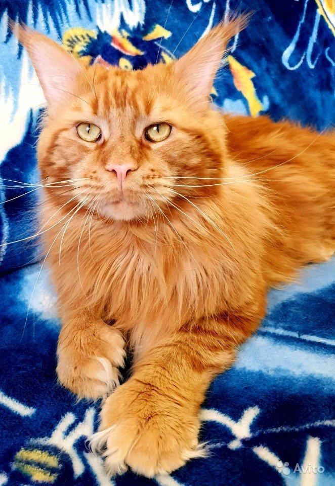 Коты эрнеста хемингуэя