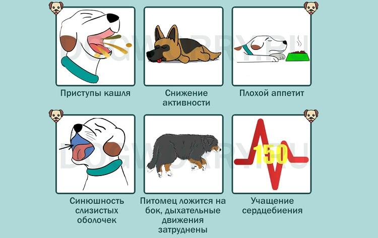 Бронхиальная астма у котов