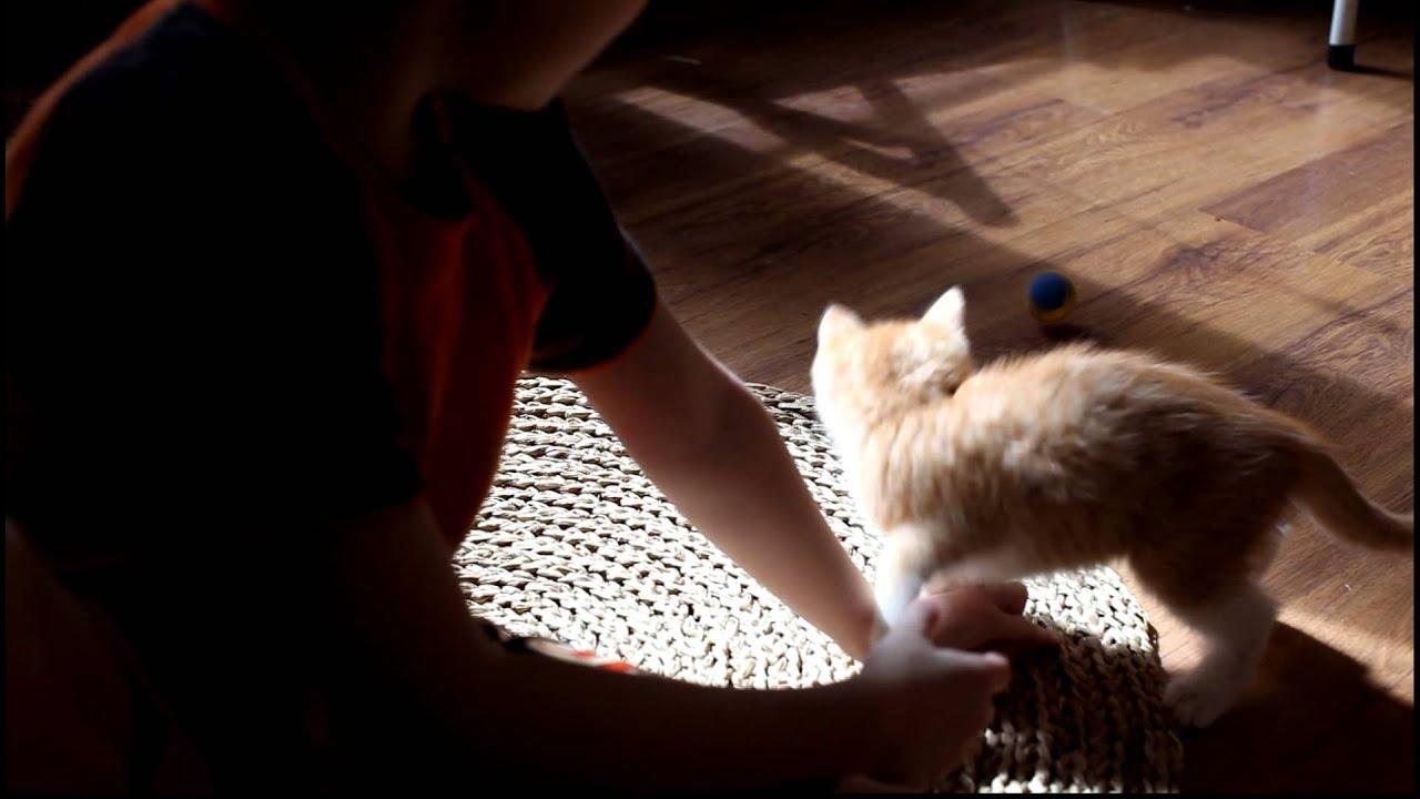 Как отучить котенка кусаться и царапаться: практические советы