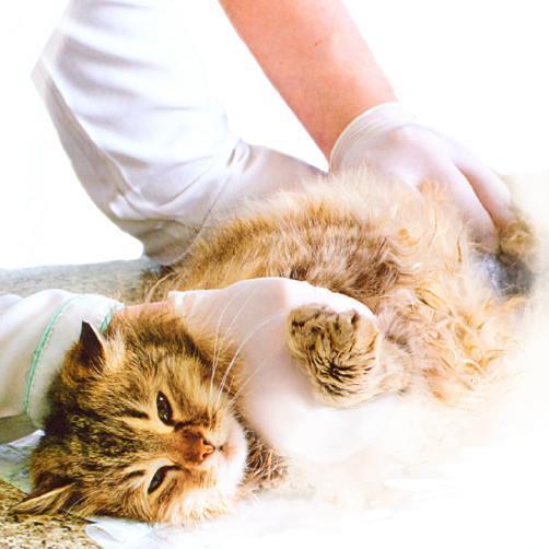 Что делать если кот подавился