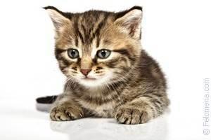 Что делать если укусила кошка?