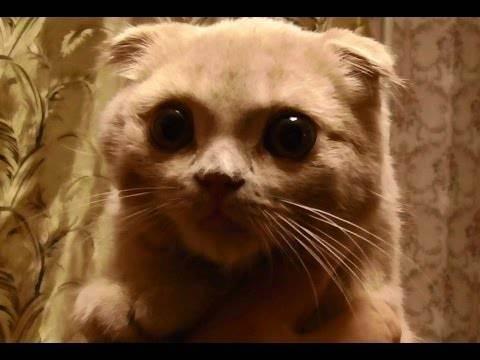 Можно ли кошкам курицу. можно ли давать куриные шеи кошкам: как давать куриные кости
