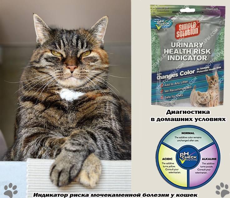 Мочекаменная болезнь у котов – симптомы, профилактика и лечение мкб у котов