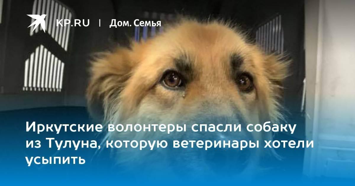 Полезно для здоровья: 10 поводов завести собаку