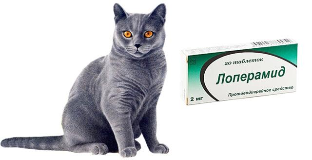 Что дать коту от поноса дома: лекарство, симптомы