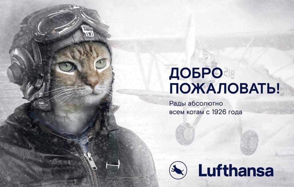 Кота мотает. кот дрожит — полный список причин от ветеринара