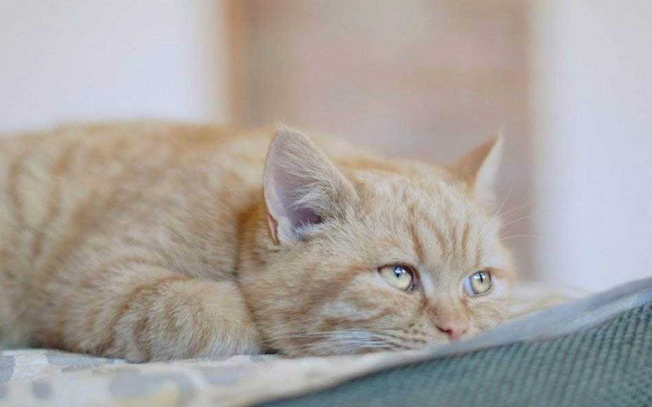 Кошачьи болезни: симптомы и лечение