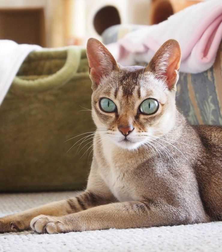 Самые милые и известные коты с большими глазами