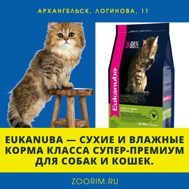 Особенности и рейтинг кормов супер-премиум-класса для котят
