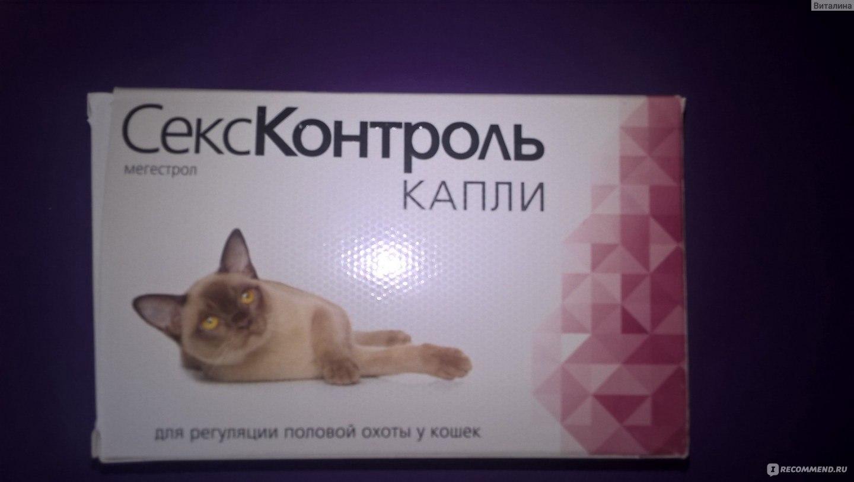 Как подобрать эффективные таблетки для кошки во время течки? | мир кошек какие таблетки помогут кошке во время течки? | мир кошек