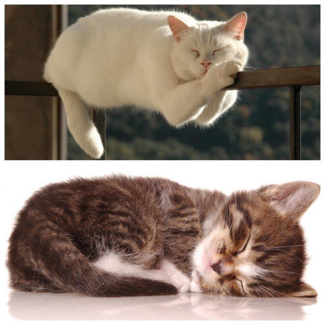 Сколько в сутки спят кошки, что влияет на продолжительность грез животного, почему коты много времени проводят во сне