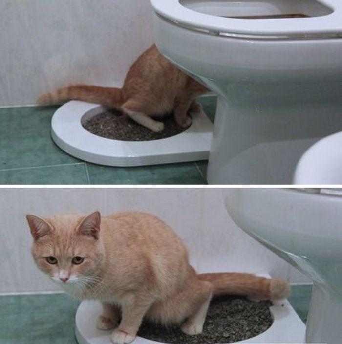 Как приучить кота к унитазу: 2 легчайших способа