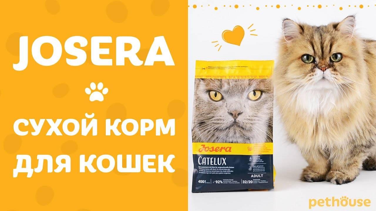 Сухой корм orijen для кошек
