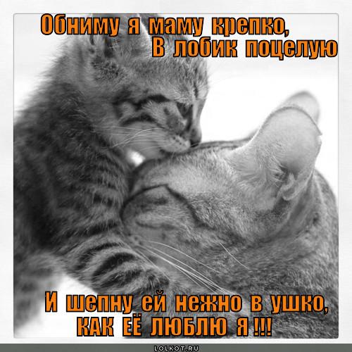 Почему нельзя обнимать котов? | кот и кошка