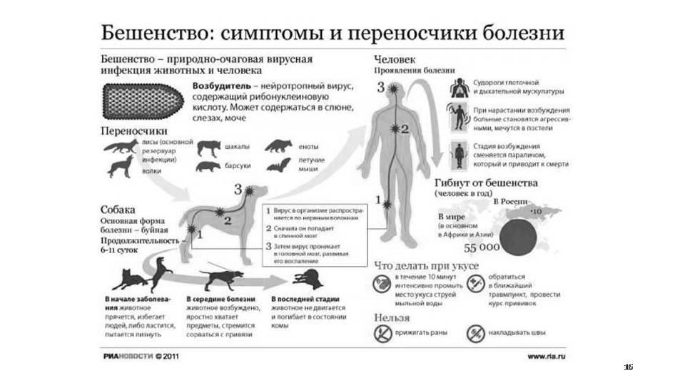 Бешенство у домашних животных - признаки, диагностика, лечение