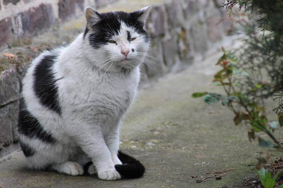 10 причин, почему у вас дома должен жить кот