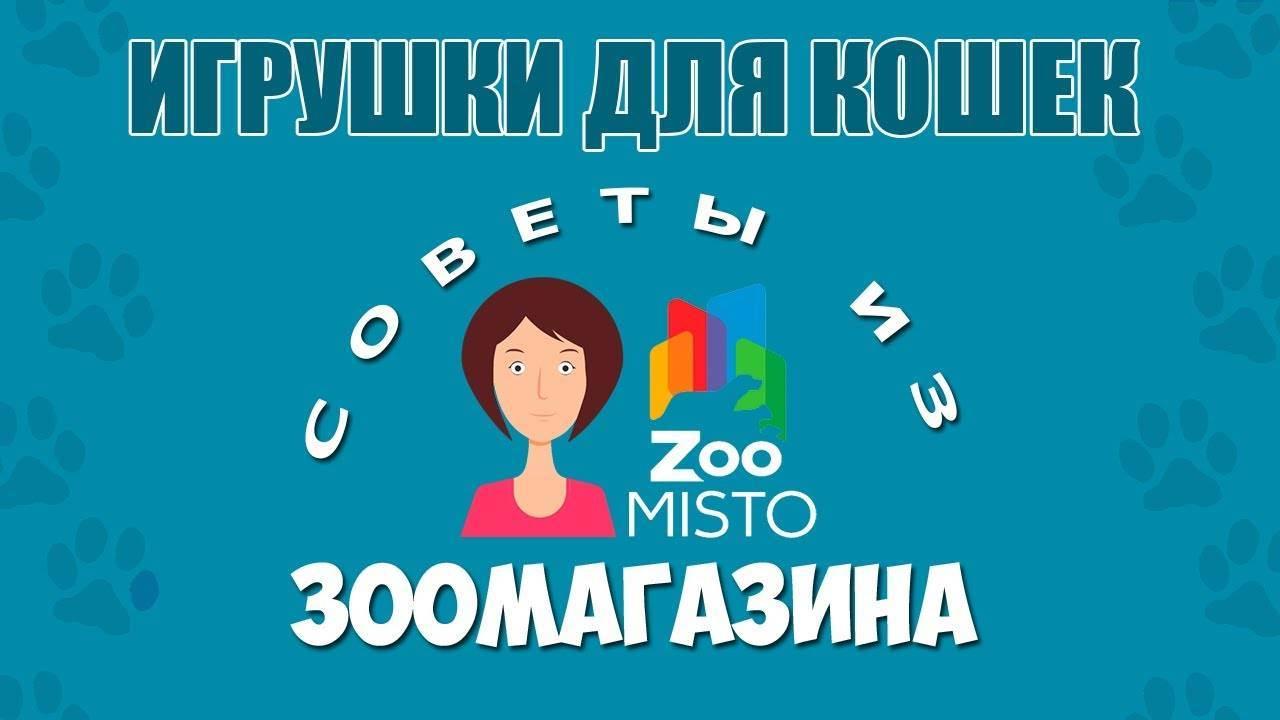 Чем отличаются зоомагазины от точек продажи зоотоваров, и много ли настоящих зоомагазинов в красноярске — статьи — rex24.ru: домашние животные, выбор, уход и воспитание, каталог компаний, эксперты.
