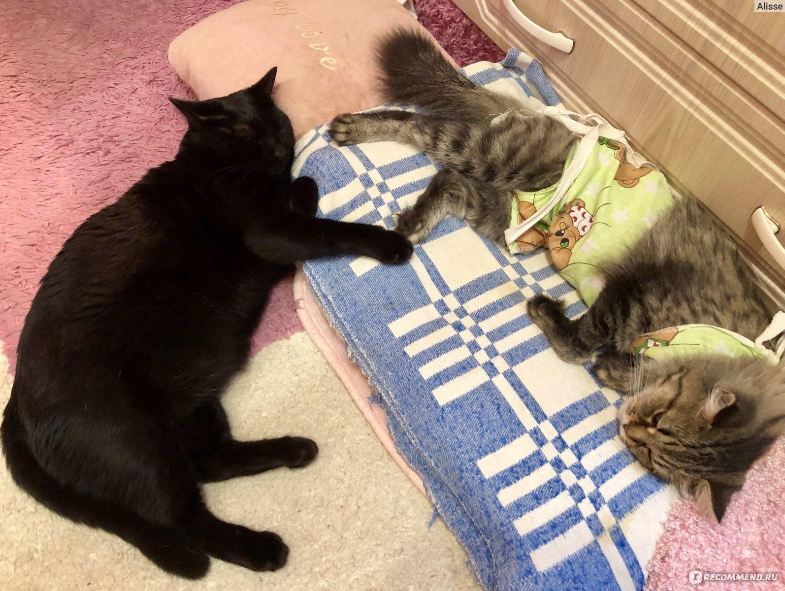 Кастрация котов: подготовка к процедуре и послеоперационный уход