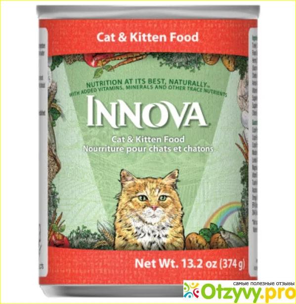 16 лучших влажных кормов для кошек