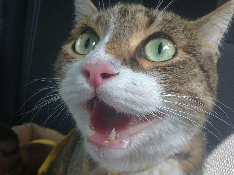 У котенка текут слюни — причины и лечение