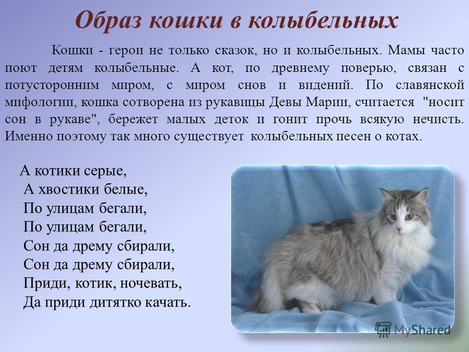 Приметы и поверья, связанные с серым котом в доме
