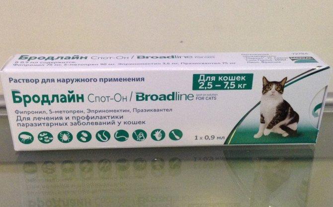Какими глистами может заразиться человек от кошки