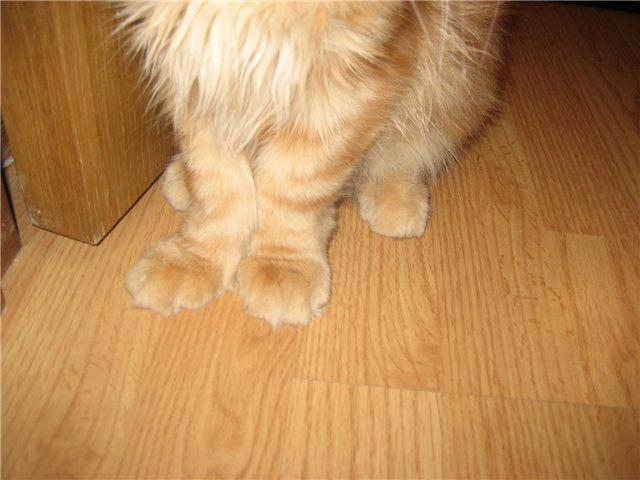 Рахит у котят и кошек: симптомы и лечение заболевания (+фото)