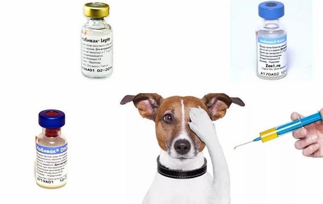 Прививки котятам от токсоплазмоза в ростове