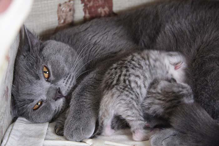 Факт или вымысел? мифы о кошках