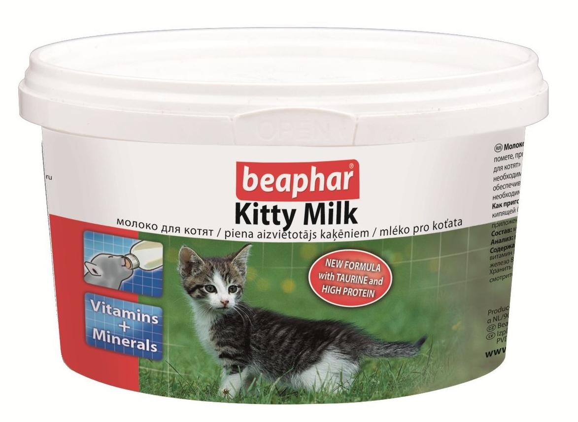 Почему кошкам нельзя давать молоко?