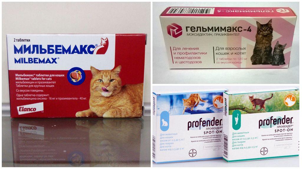 Как часто давать таблетки от глистов кошкам