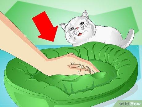 Как успокоить кота когда он хочет кошку: народные средства