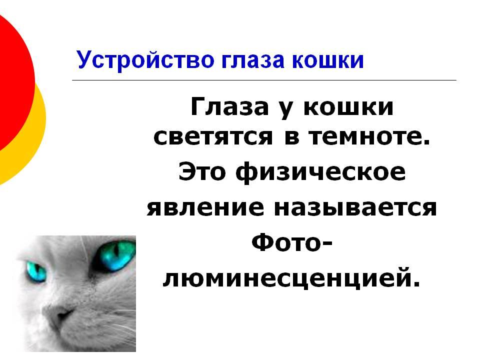 Свечение глаз кошек в темноте – почему так происходит?