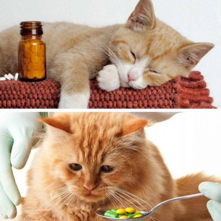 Можно ли котам молочные продукты: чем заменить, вред, польза