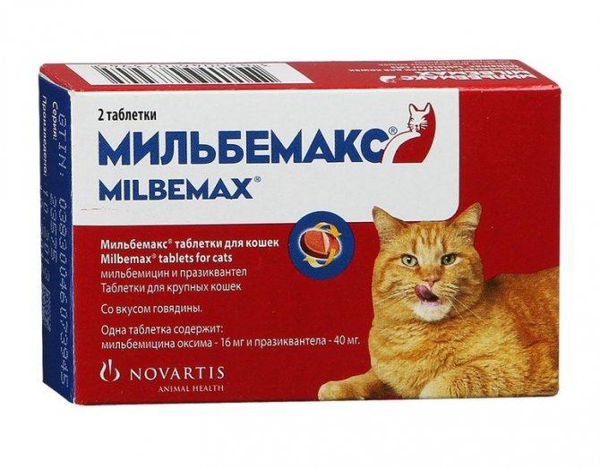 Как давать Празиквантел кошке?