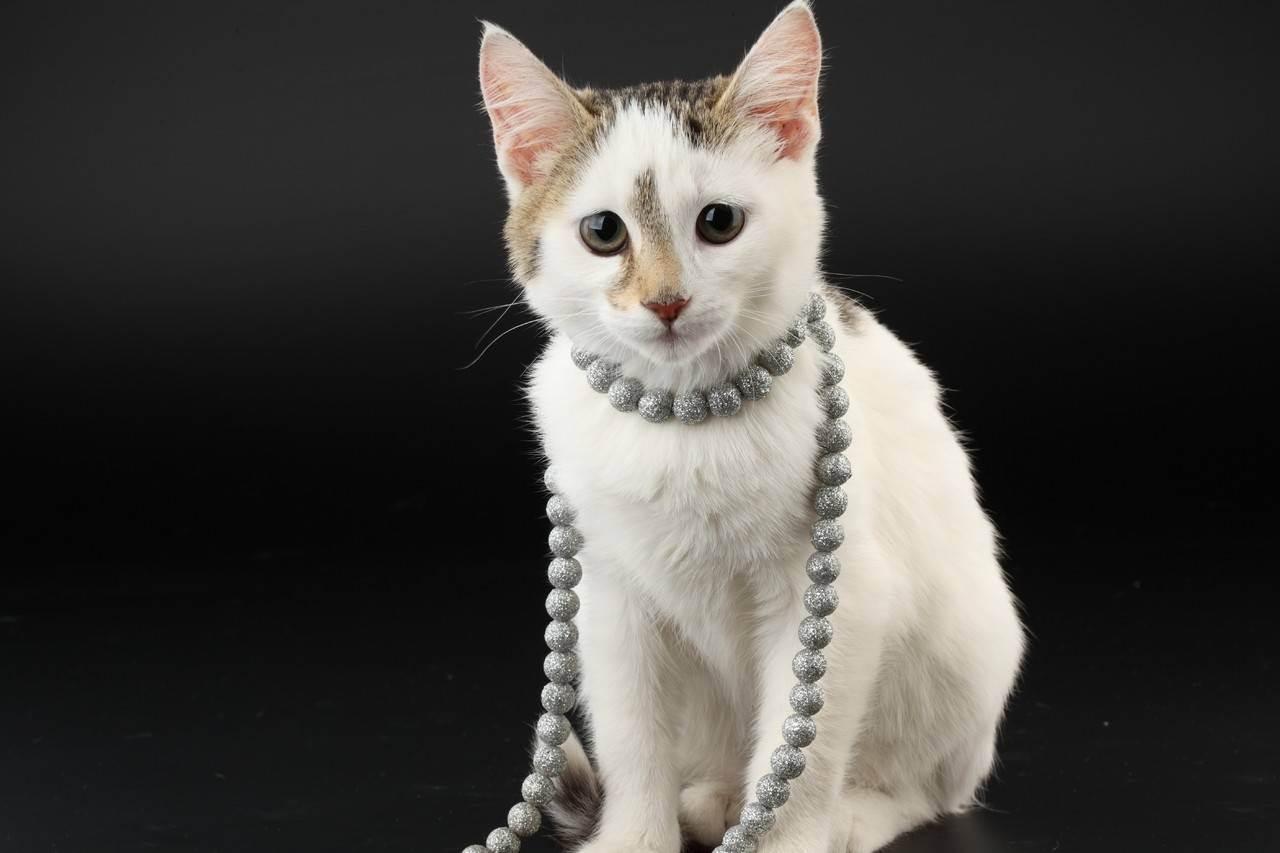 Как узнать, что кошка беременная. сколько кошка ходит беременная