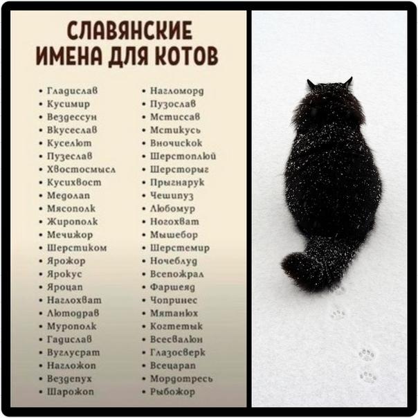 Красивые имена для котов мальчиков