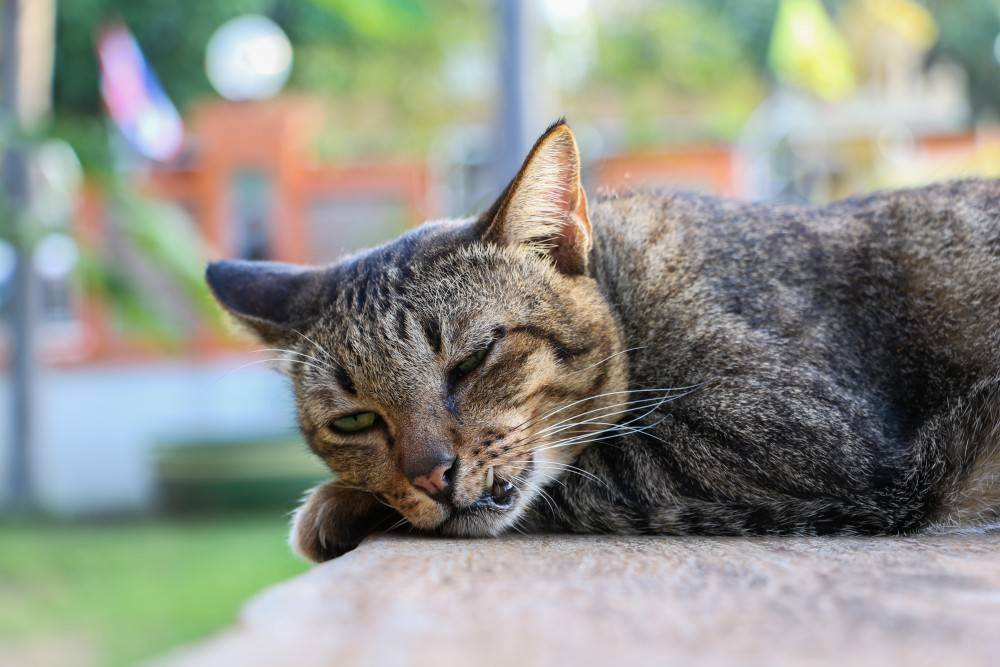 Как правильно определить возраст кошки?