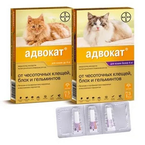 Суспензия и капли на холку от глистов для кошек: обзор и правила применения препаратов
