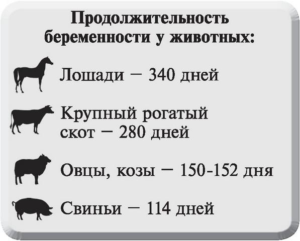 Беременный сфинкс: сколько времени вынашивает малышей лысая кошка и как проходят роды