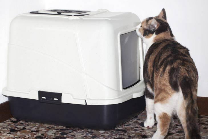 Выбираем лоток для кошки на основе их плюсов и минусов