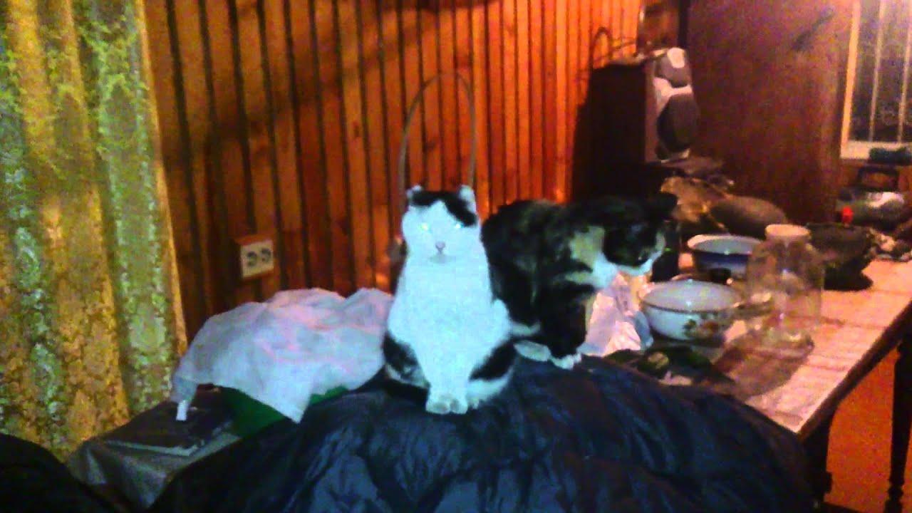 Правда ли, что кошки видят потусторонний мир?