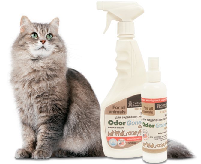 Как избавиться от запаха кошачьей мочи: самые эффективные методы